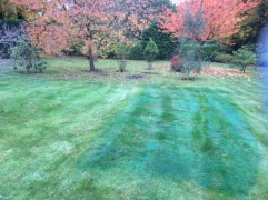 See Where You Have Sprayed on a Lawn
